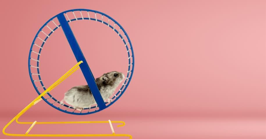 Roda dos ratos